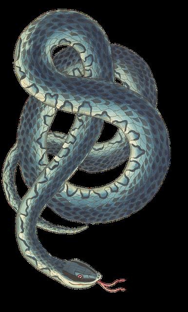 snake-3066876_640 (1)